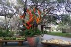 Birds of paradise, at the paradise of Bird Island Lake Ranch!